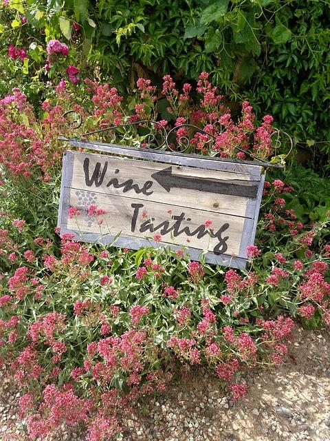 Social media marketing per il vino e turismo: formazione a Gorizia