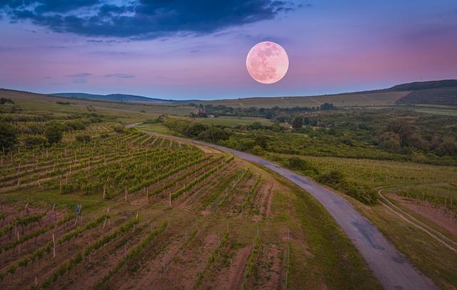 Comunicare il vino grazie ad un'immagine che susciti emozioni