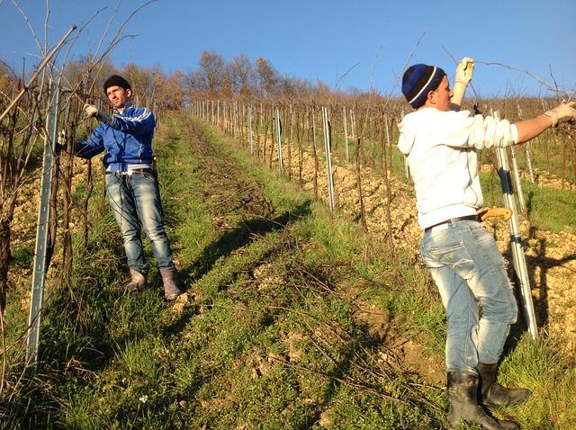 Comunicare il vino raccontanto in presa diretta i lavori in vigneto