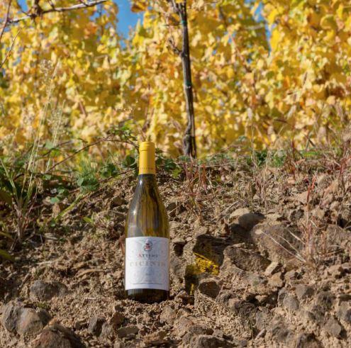 Attems azienda vitivinicola